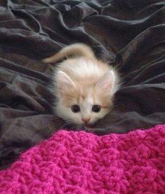 Tiny cutie