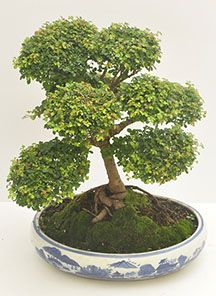 Magenta, Html, Herbs, Plants, Gift Shops, Herb, Plant, Planets, Medicinal Plants