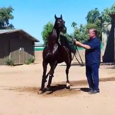 arabian horse videos - Shopping for The actual Proper Equine Big Horses, Black Horses, Cute Horses, Pretty Horses, Horse Love, Funny Horse Videos, Funny Horses, Funny Animal Videos, Cute Funny Animals