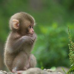 Follow @NatGeoWildTV for more amazing animal photos! @NatGeoWildTV  Pure Baby, Jigokudani Monkey Park | Photograph by ©Masashi Mochida