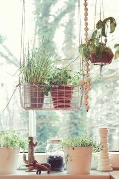 Urban Jungle Bloggers: Kitchen Greens by @ZimtZebra