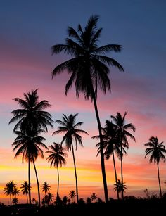 Palm Trees shilouetted against the dusk - Trinidad & Tobago Islands