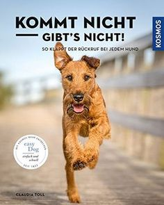 Train callback - what is important? - dogeridoo-Rückruf trainieren – worauf kommt es an? – dogeridoo Does not come, does not exist: This is how the recall works for every dog - Baby Dogs, Pet Dogs, Animals And Pets, Funny Animals, Dog Training, Training Tips, Food Dog, Irish Terrier, Chinese Crested Dog
