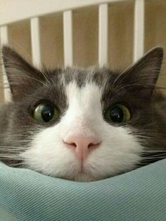 """I am so bored! Prepare for cat insanity in 3...2....1 !"""