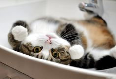 Why are you upside down human - http://cutecatshq.com/cats/why-are-you-upside-down-human/
