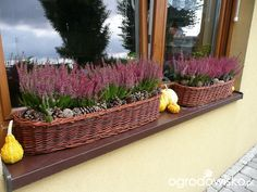 Ablakpárkány dekoráció Window Box Flowers, Balcony Flowers, Outdoor Planters, Outdoor Gardens, Garden Makeover, Winter Flowers, My Secret Garden, Balcony Garden, Garden Paths