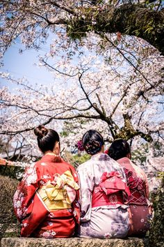 The beauty of japanese sakura! The best place to celebrate and enjoy the spring…