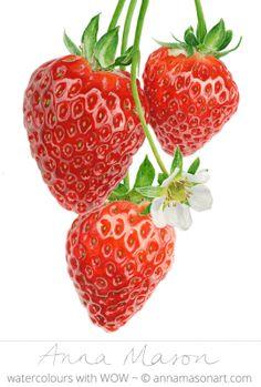 "Strawberries © 2011 ~ annamasonart.com ~ 31 x 41 cm (12"" x 16"" ) botanical art"