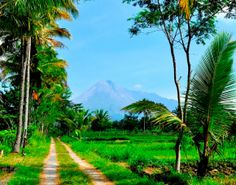 Landscape in the countryside of Java #Landscape #countryside #Java #indonesia #travel http://heartofbaliandjava.com/