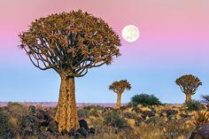 Panoramio - Vincitori del contest Panoramio per foto Geotaggate