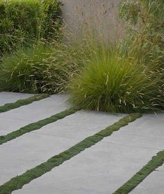 of Vision: Nature Glorified Concrete slabs with moss strips, can be replicated with mini Mondo grass. Pennisetum grass at the rearConcrete slabs with moss strips, can be replicated with mini Mondo grass. Pennisetum grass at the rear Garden Paving, Garden Paths, Modern Landscaping, Backyard Landscaping, Landscaping Ideas, Back Gardens, Outdoor Gardens, Landscape Architecture, Landscape Design