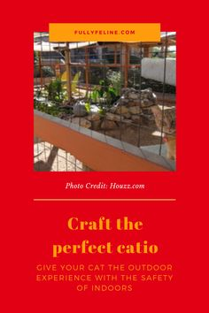 Does your indoor cat want a taste of the outdoors, but you're worried about him staying safe? A catio is a great option. Learn how to craft a catio for your cat #cats #catio