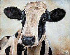 Maude~  Cow art by Laura Carey
