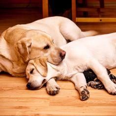 Dog Breeding - Dog Breeds #DogBreeds