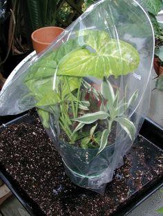 Make More Green - January 2011 - SBS eNewsletter