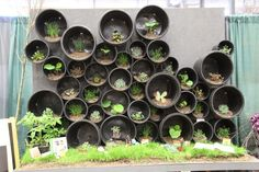 plastic pots become a growing wall - Cory Christopher | Edmonton Designer