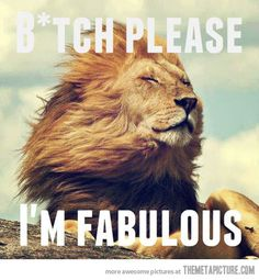 Ridiculously photogenic lion…