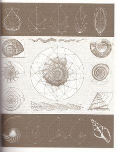 Fibonacci Series and other geometrical patterns...