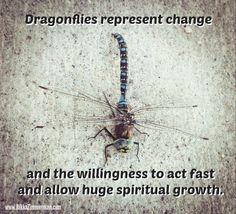 Hug a dragonfly today ;-)