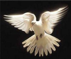 """Agnus Dei: """"El Espíritu de la Verdad los introducirá en toda ..."""