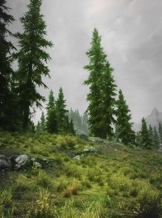 Rich and green Forrest, Skyrim nature