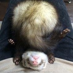 Fuzzy ferrty butt!