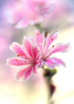 Little Flower by gryheubach. @go4fotos