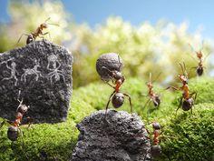 Credit: Andrey Pavlov/Barcroft Media A Ne-ant-erthal scene