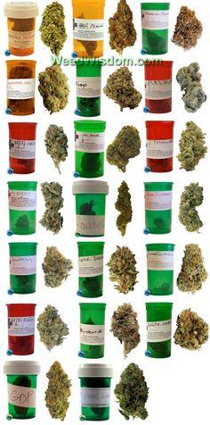 Various kinds of marijuana. http://www.spliffseeds.nl/silver-line/blue-berry-seeds.html