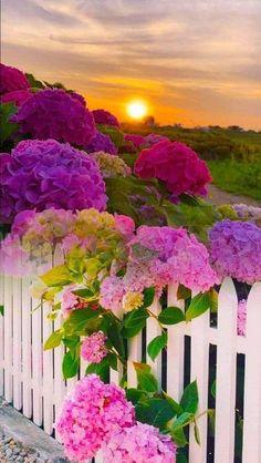 Wallpaper Nature Flowers, Beautiful Landscape Wallpaper, Flower Background Wallpaper, Beautiful Flowers Wallpapers, Beautiful Rose Flowers, Flower Backgrounds, Amazing Flowers, Beautiful Landscapes, Beautiful Gardens