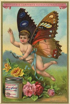 Liebig butterfly baby