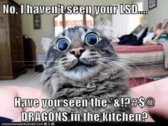 No I Haven't Seen Your LSD... Very Funny Cat Meme