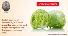 Did you know that the iceberg lettuce is a rich source of vitamins and comprises water and dietary fibre? The calorie count is pretty low too – 100 gm of iceberg lettuce contains only 14 calories! A rich source of vitamin A, it is very good for your eyes and helps strengthen the immune system as well. Not only that, it is a rich source of foliate too! At JNI, we recommend the inclusion of this great vegetable as part of the regular diet.
