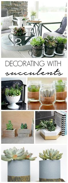 Tips for Decorating With Succulents