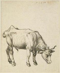 Young Steer - Albrecht Durer