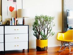 Vaso criativo com planta na sala