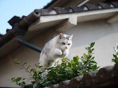 jumping cat No.2