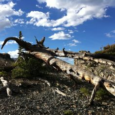 Interesting fallen trunk at the top of Mount Royal in Frisco, Colorado.