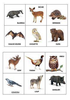 Wild Animals Pictures, Animal Pictures, Play Store App, French Language Lessons, Babysitting, Montessori, Paw Patrol, Preschool Activities, Games For Kids
