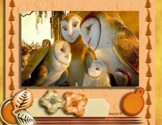 Gorgeous soft barn owl--this is a spectacular photo of a family of owl! Made by me in in 2012 My Scrapbook, Owl, Barn, Nature, Painting, Owls, Painting Art, Paintings, Nature Illustration