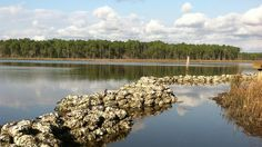 Dining with a Purpose: Check out how #SouthWalton restaurants are helping the Choctawhatchee Basin Alliance create oyster reefs out of shucked oyster shells!