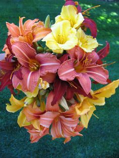 Mix daylillies  Waiting for spring and summer to see the lily garden.