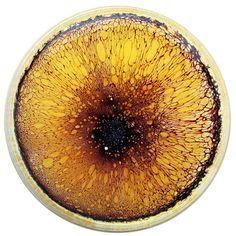 Daily [Petri] Dish. #science #gold