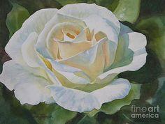 Sharon Freeman - Creamy Rose