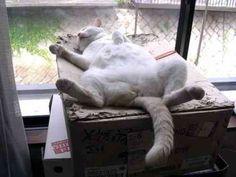 【全てはお猫様のために??】 ネコを飼ってる下僕にしかわからない『あるある』40選!!! - ペット日和