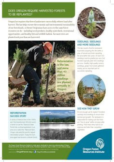 Does Oregon require harvested forests to be replanted? by the Oregon Forest Resources Institute