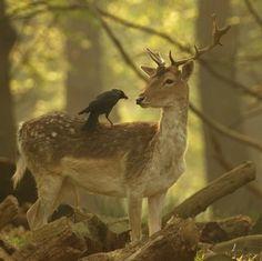 Bosques y animales (fotos)