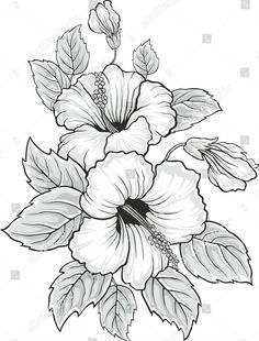 stock-vector-blooming-beautiful-hibiscus-flower-hawaii-symbol-card-or-floral-bac. - stock-vector-blooming-beautiful-hibiscus-flower-hawaii-symbol-card-or-floral-background-for-invitati - Coloring Pages For Grown Ups, Flower Coloring Pages, Colouring Pages, Coloring Books, Hibiscus Flower Drawing, Hibiscus Flowers, Flower Art, Drawing Flowers, Flower Ideas