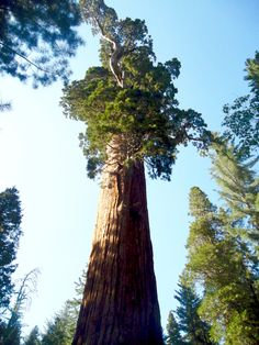 Sequoia National Park Travel Tips! (Read This Before You Go) - Never Ending Journeys