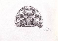 sketch tortoises Mehr Tortoise Drawing, Tortoise Tattoo, Tattoo Sketches, Tattoo Drawings, Art Drawings, Baby Tattoos, Body Art Tattoos, Tatoos, Marcelo Tattoo
